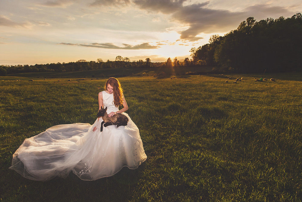 Wedding bride in field with lamb and sheep