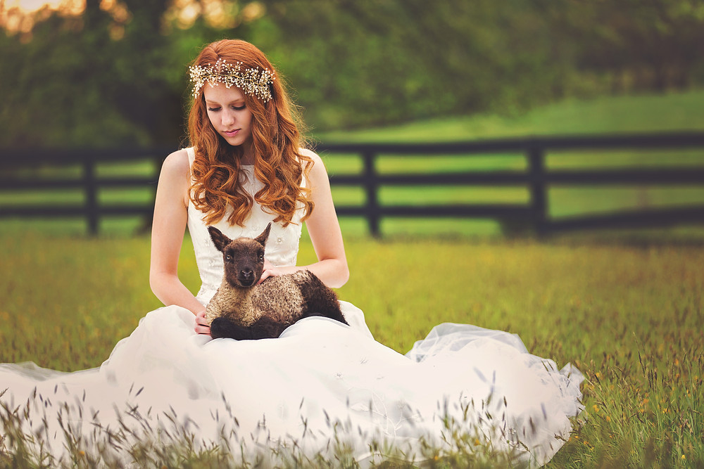 Bride with lamb by Tim Souza Photography