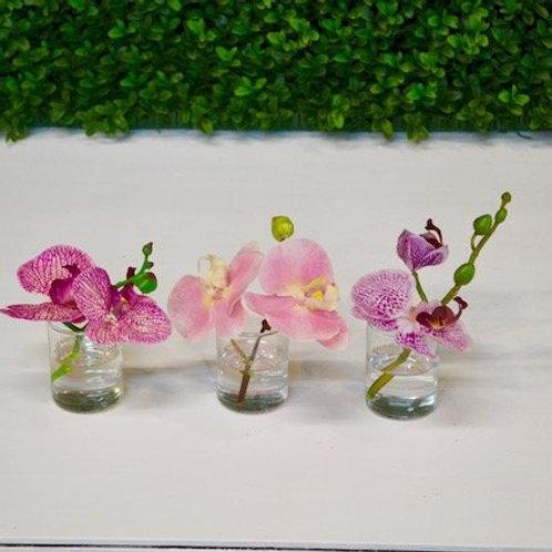 Phal Bloom in Votive (3 Colors)