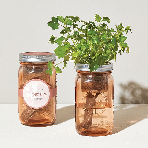 Parsley (Pink) - Hydroponic Garden Jar