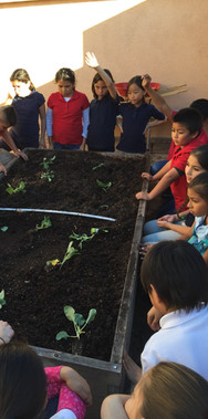 learning-how-to-grow-vegetables_51250178994_o.jpg