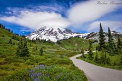 ENTERING PARADISE : Mount Rainier National Park