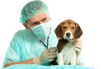 Perro-y-veterinario.jpg