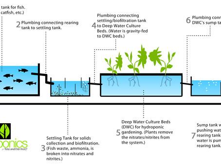 Aquaponics vs. Hydroponics vs. Ecoponics
