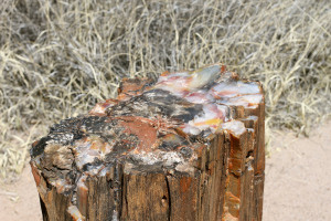 Visiting Petrified Forest National Park and more..