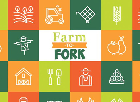 Random thoughts on Sustainability- From last years Farm to Fork event
