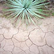 Baby Yucca, Sespe Wilderness