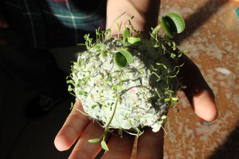 Sprouted seed ball