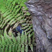 Limekiln, Big Sur
