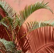 Palm, Sayulita