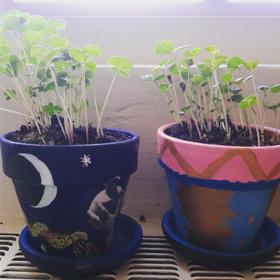 'I Am Planting' painted pots
