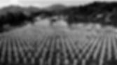 Screen Shot 2020-02-10 at 12.56.32 PM.pn