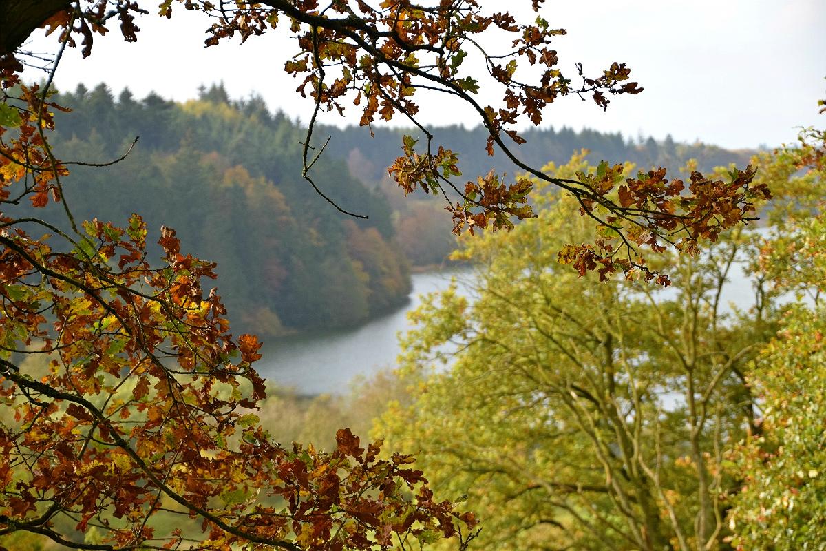 Rørbæk Sø i efterårsfarver