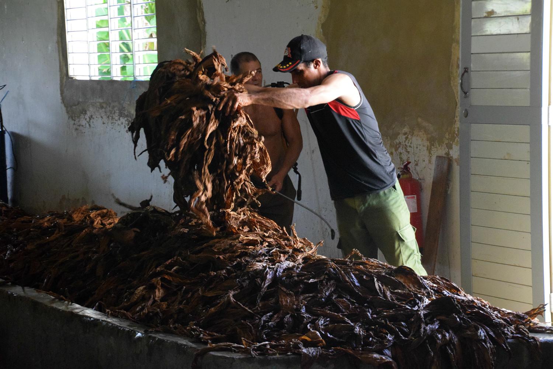 Tobaksfabrik i Viñales