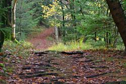 Motiv fra skoven