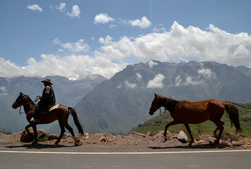 Vaquero valle.jpg