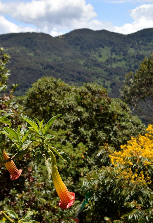 Frodige bjerge uden for Bogotá