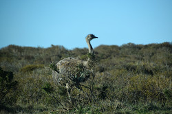 Puerto Madryn: Ñandu, Valdes-halvøen