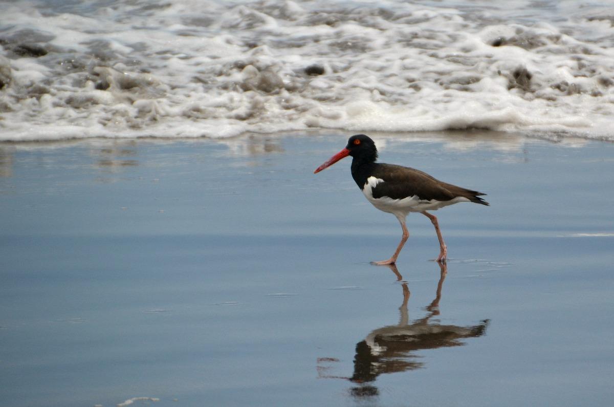 Fugl i vandkanten