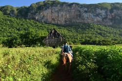 Ridetur i Viñales-dalen
