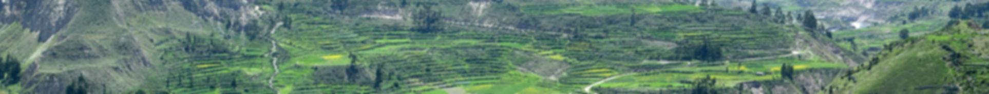 Banner Colca1.jpg