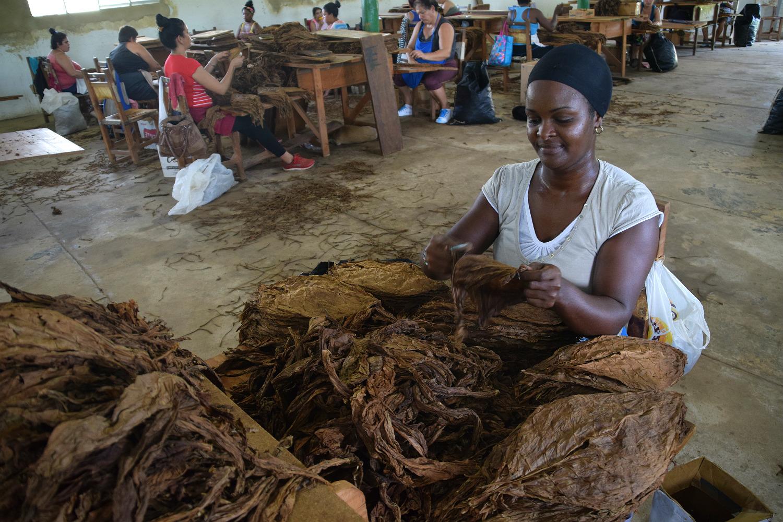 Kvinde arbejder på tobaksfabrikken