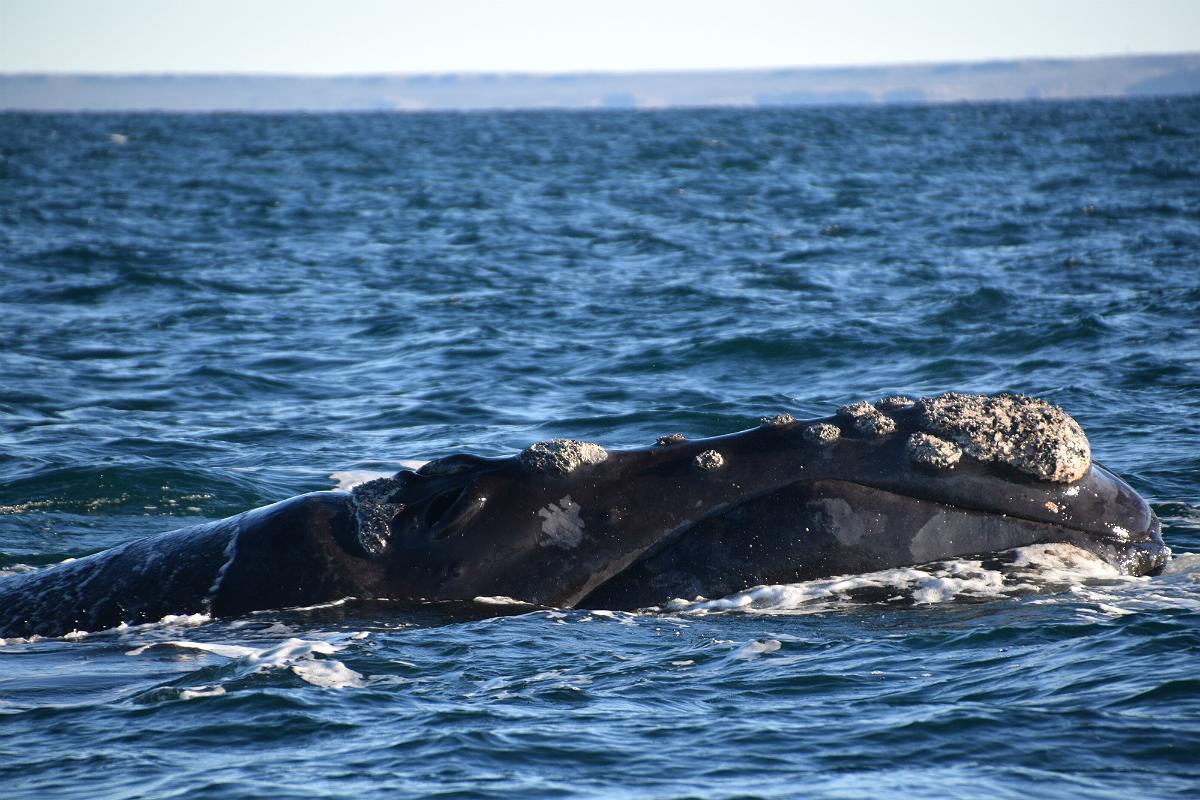 Puerto Madryn: Rethval