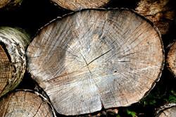 Træstamme
