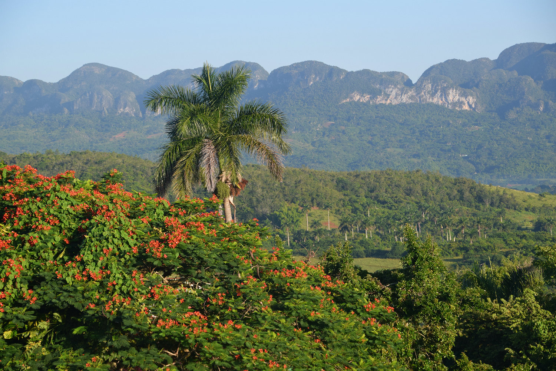 Viñales - palmer og sandstensbjerge