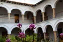 Blomster i klostergården