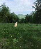sammy overlooking mountain.jpg