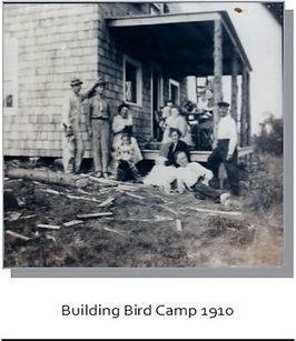 building bird.jpg