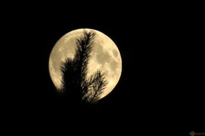 Der Zauber des Frühlings-Monds