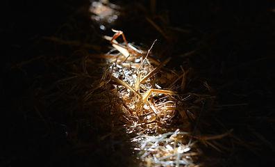 straw-667147_1920.jpg