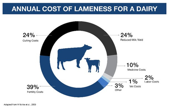 Lameness: the importance of Biotin in dairy cow rations