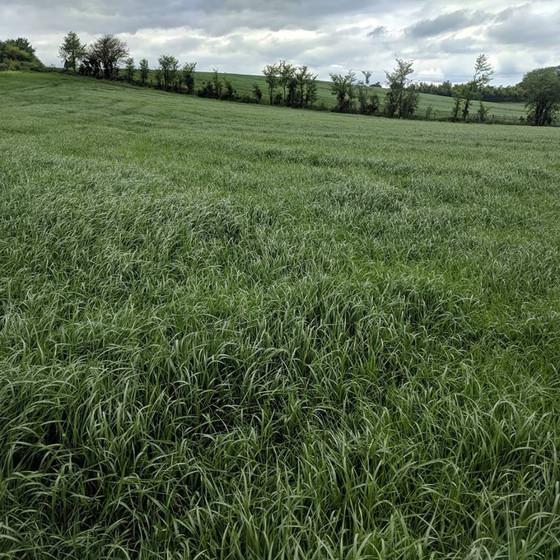 Fertiliser for Grassland - think before you spread!