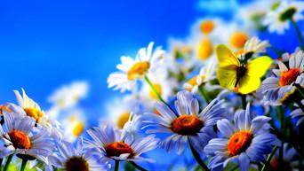 Bahar ve Umut