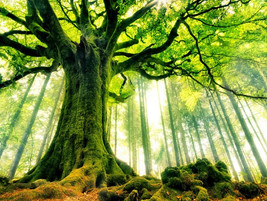 Ağaçlar ve Onlara Yazılmış Şiirler