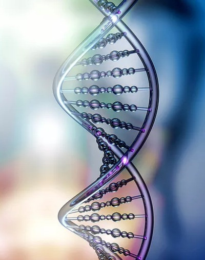 Family History and DNA