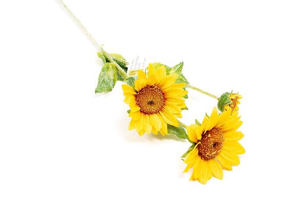 פרחים חמנייה צהוב