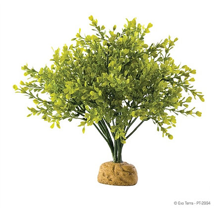 Exo Terra Rainforest Plant Boxwood Bush