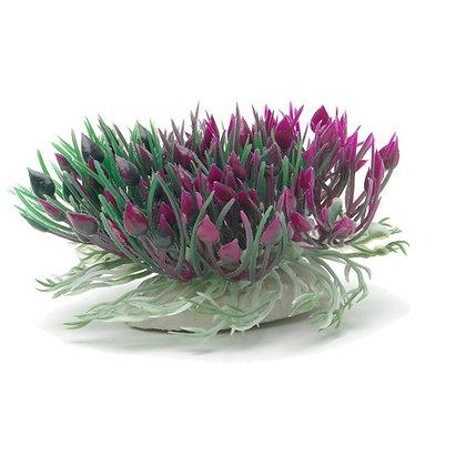 Marina Betta Purple Hearts Shrub - 7.6 cm