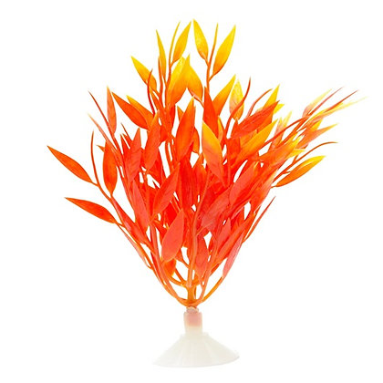 Marina Betta Fire Grass - 12.7 cm
