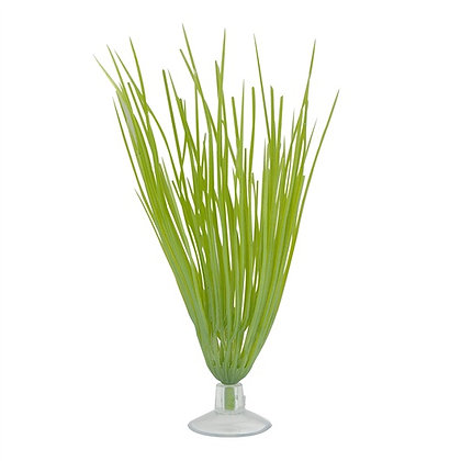 Marina Betta Kit Hairgrass Plant With Suction Cup