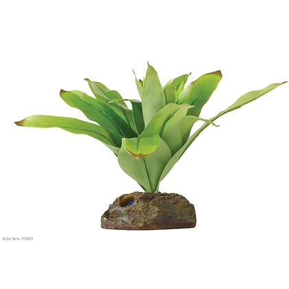 Exo Terra Neoregelia Tarapotoensis Small