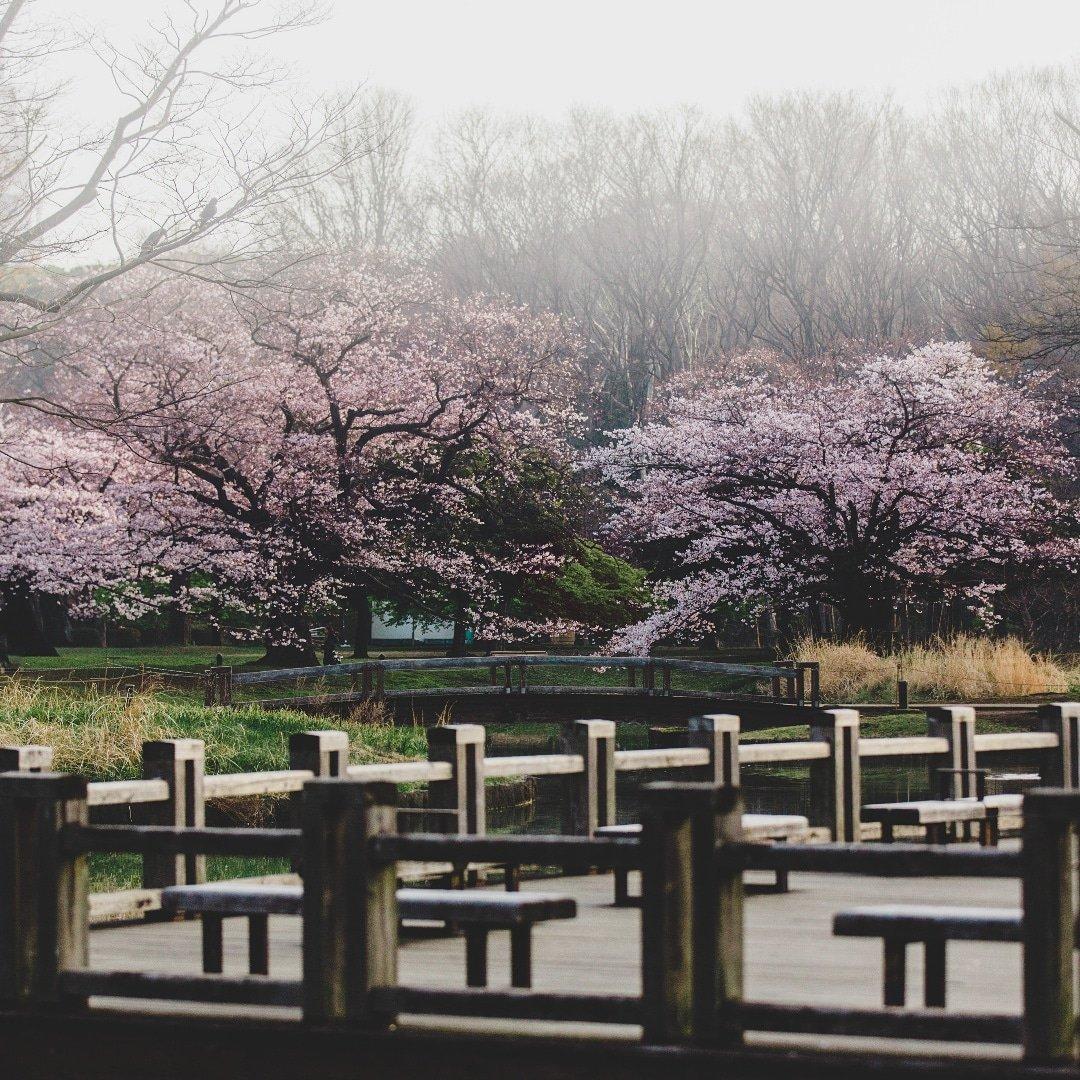 Tokyo_Yoyogi