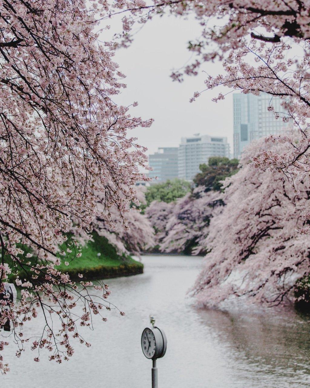 Tokyo_Spring