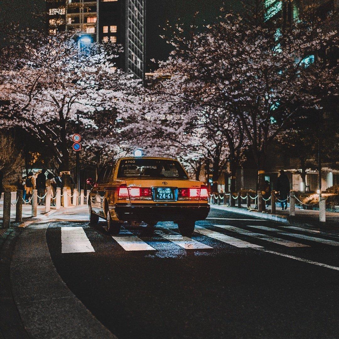 Tokyo_Sakura