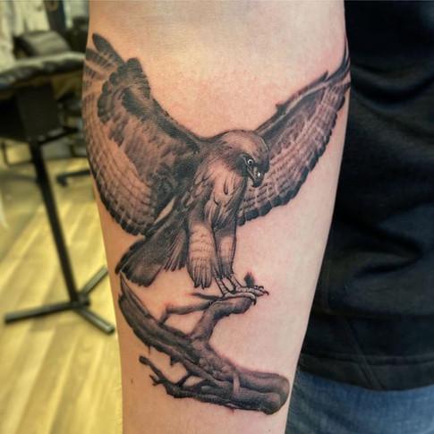 Fine Line Hawk Tattoo