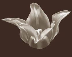 flowerbandwduotone.jpg